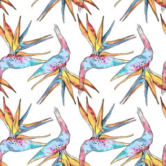 Seamless pattern of strelitzia tropical plant. Watercolor hand drawn flowers and leaves. Design for invitation, wedding or greeting cards, clothes, print. Flower concept. Tropical concept