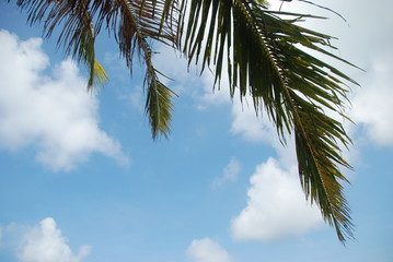 A palm leaf with summer sky and clouds in the background