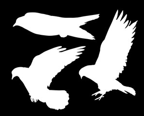 white silhouettesof three flying pigeons