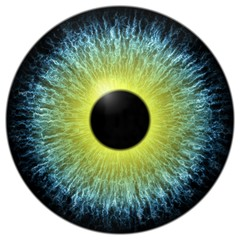 Deurstickers Iris Yellow and blue 3d eyeball with white background