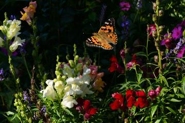 Schmetterling 401