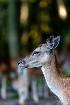 Pic of a deer taken at the woods