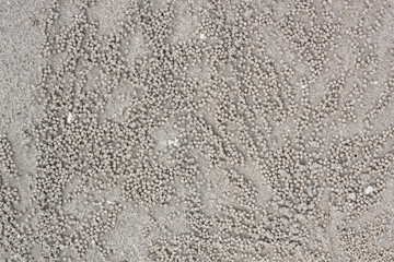 ์Nature outdoor the sand is a grain of crab.
