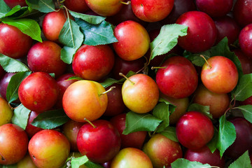 Red and yellow plums background. Top view