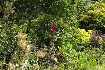 A single lupin flower in an English summer garden