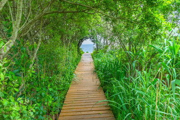 Beach Ocean Path Boardwalk Forest Trees Padnaram Dartmouth Massachusetts