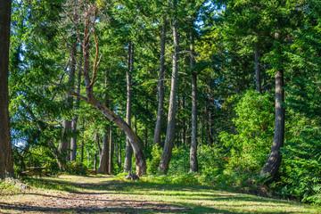 Leaning Tree Landscape