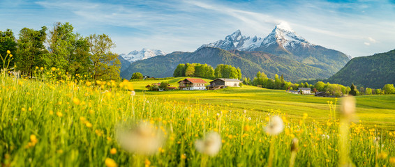 Canvas Prints Honey Idyllic landscape in the Alps with blooming meadows in springtime
