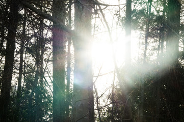 Sunlight through the forest trees