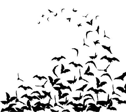 Flying bats in the sky