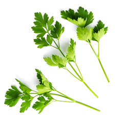 Parsley on white