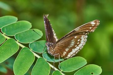 Schmetterling im Feld auf Blume