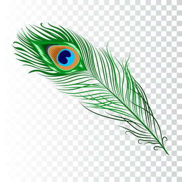 Peacock feather collection
