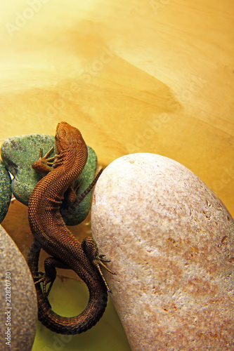 Lizard Which Lies Beautifully And Heats Up On A Small Stone In A