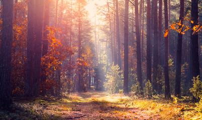 Tranquil autumn landscape