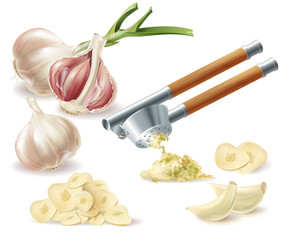 Vector clipart with sprouted head of garlic, peeled cloves, chopped slices and metal press, isolated on white background. Natural organic vegetable, spicy condiment, ingredient for eating and cooking