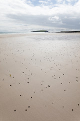 worm secretions on beach