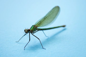 Dragonfly, insect resting on turquoise wall, narrow focus