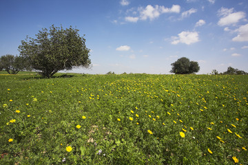Midday on blossoming hills of hot coast of sea - grass, flowers and trees