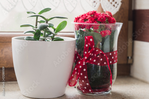 Red Flowers In The Vase Next To Window Stock Photo And Royalty Free