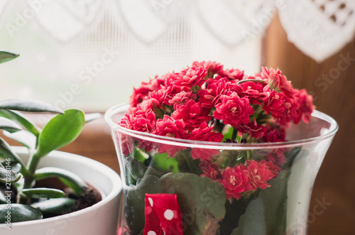 Close Up Of Red Flowers In The Glass Vase Next To Window Stock