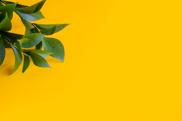 green branch on a yellow background