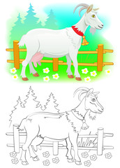 Colorful and black and white pattern for coloring. Illustration of cute goat. Worksheet for children and adults. Vector image.