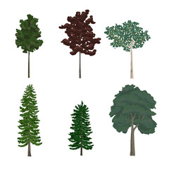 Various of trees illustration