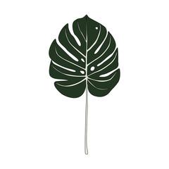 Illustration of split leaf philodendron