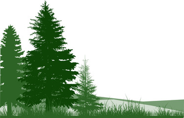 fir green trees and grass on white