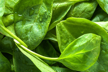 Fresh spinach background, leafy vegetables, green organic food and vegan dieting concept