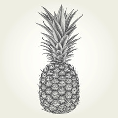 Hand drawn pineapple. Vintage vector illustration