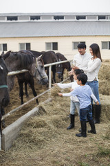 Young Chinese family feeding horse