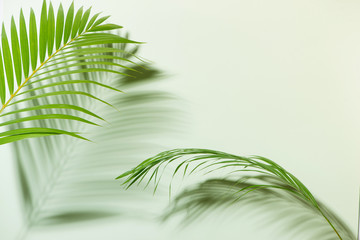 Creative layout made of colorful tropical leaves on white background. Minimal summer Wall mural