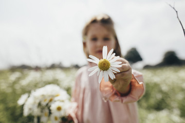 Little girl holding picked chamomile, close-up