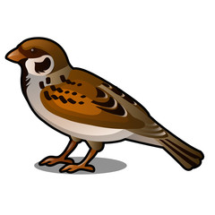 Brown Sparrow isolated on a white background. Vector cartoon close-up illustration.