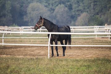 Horse standing in paddock