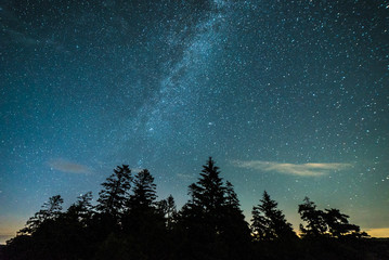 Milky Way Starscape over Evergreen Trees Forest Silhouette