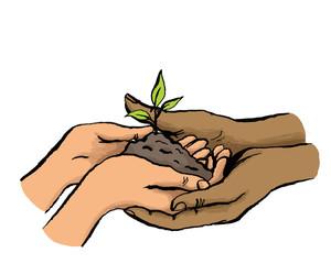 Multikulturelle Hände halten gemeinsam Setzling