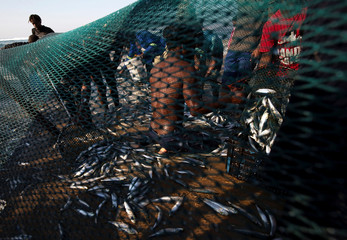 Fishermen empty a net of sardines during the sardine run in Umgababa
