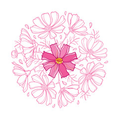 Vector round bouquet with outline Cosmos or Cosmea flower bunch, ornate leaf and bud pastel pink isolated on white background. Contour blooming Cosmos plant for elegance summer design.