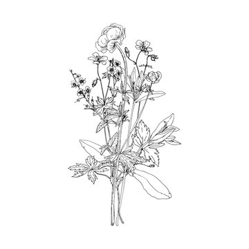 Vector bouquet with drawing wild plants