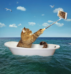 The cat is sitting into the tub and making a selfie in the sea.