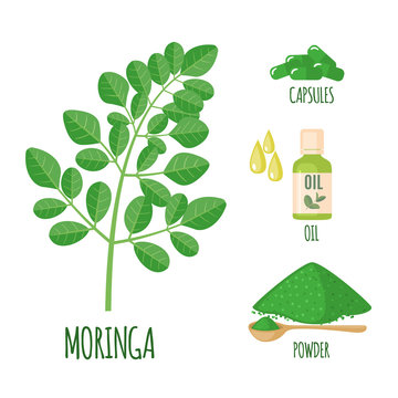 Moringa set with powder, oil and capsules in flat style isolated on white.
