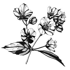 Awesome jasmin flowers frame. Hand drawn ink illustration