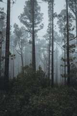 Nature and vulcanic landscapes in Tenerife, Spain