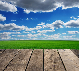 Wall Mural - Image of green grass field and bright blue sky