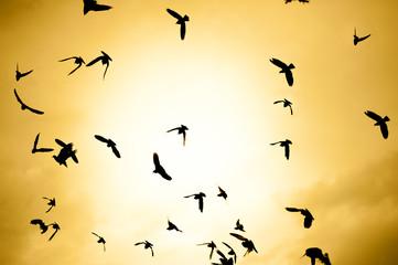 flock of birds on a sunset