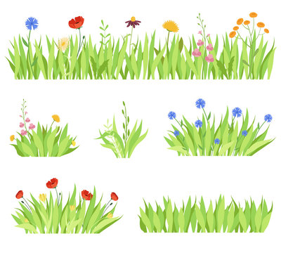 Set of different natural garden flowers in the grass. Fresh garden flower beds on a white background. Vector illustration