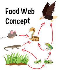 Science food web concept